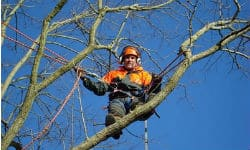 tree-surgeon-hampshire