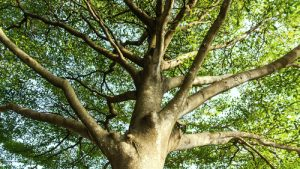 garden-trees