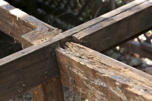 dry-rot-treatment