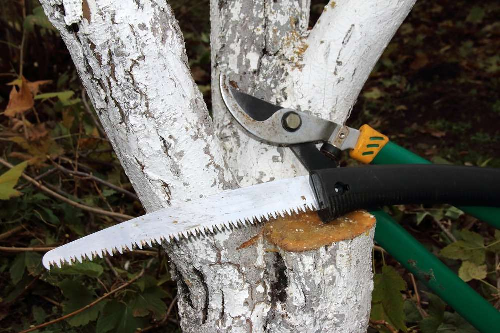 tree removal costs