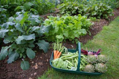 Vegetable-gardenartfire.com